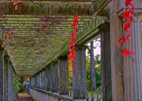 Schlosspark Glienicke: Gang mit rotem Efeu