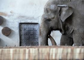 Elefant_3.1