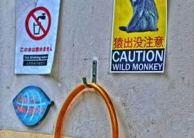 Achtung-Wilde-Affen_1.2